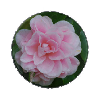 Flowering Pink Camelia Jelly Belly Tins