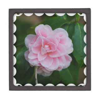 Flowering Pink Camelia Jewelry Box