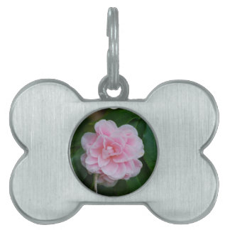 Flowering Pink Camelia Pet Name Tag