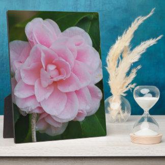 Flowering Pink Camelia Plaque