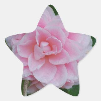 Flowering Pink Camelia Star Sticker