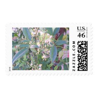 Flowering Plant Postage Stamp