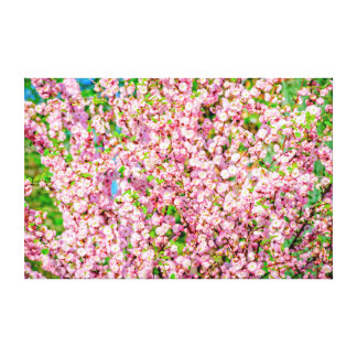 Flowering Plum Canvas Print