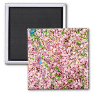 Flowering Plum Magnet