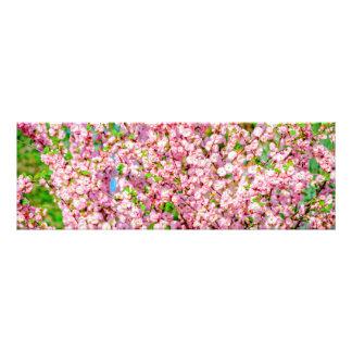 Flowering Plum Photo Print