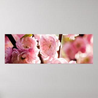 Flowering Plum - Pink Paradize Poster