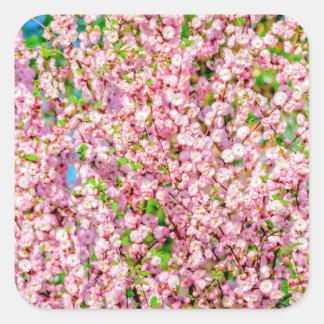 Flowering Plum Square Sticker