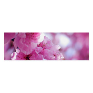 Flowering Plum Tree Blossom Business Card