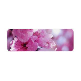 Flowering Plum Tree Blossom Label