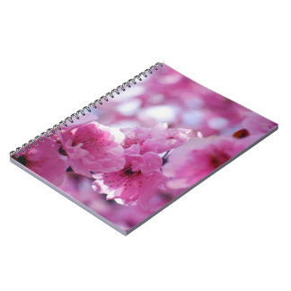 Flowering Plum Tree Blossom Notebooks