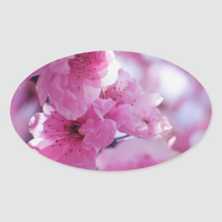 Flowering Plum Tree Blossom Oval Sticker