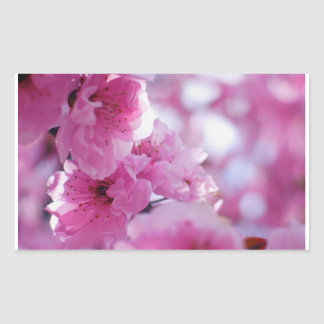 Flowering Plum Tree Blossom Rectangle Stickers