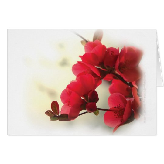 Flowering Quince Card