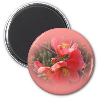 Flowering Quince - Chaenomeles speciosa 2 Inch Round Magnet