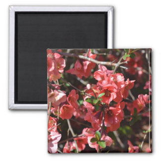 Flowering Quince-Five 2 Inch Square Magnet