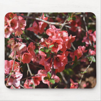 Flowering Quince-Five Mouse Pad