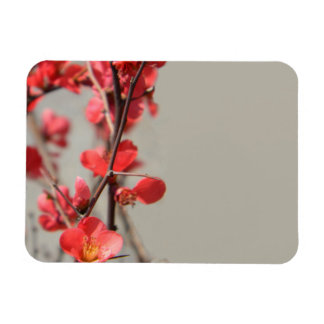 Flowering Quince Magnet