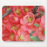Flowering Quince Mouse Pads