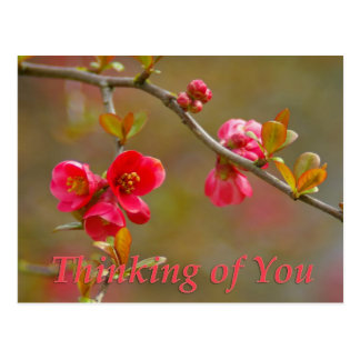 flowering quince thinking of you postcard