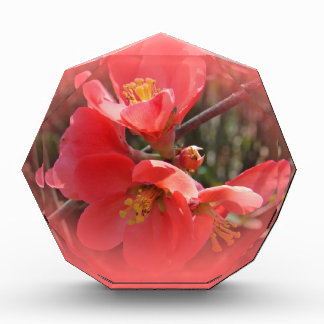 Flowering Quince Tree Acrylic Award