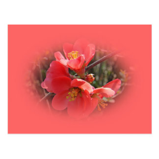Flowering Quince Tree Postcard