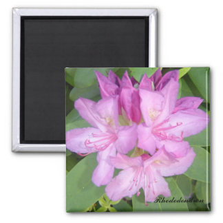 Flowering Rhododendron Bush 2 Inch Square Magnet