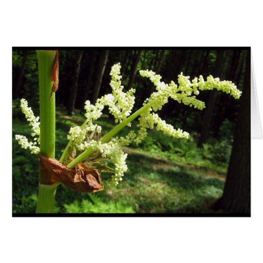 Flowering Rhubarb Stalks Blank Card