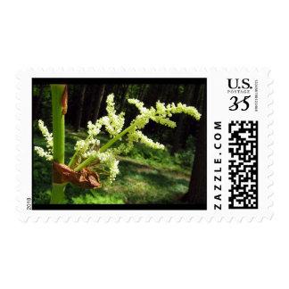 Flowering Rhubarb Stalks – Medium stamp