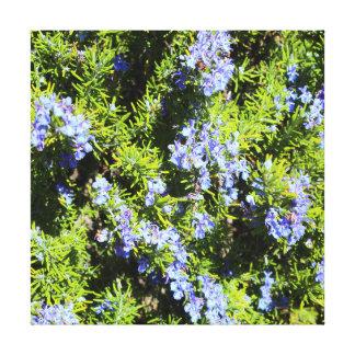 flowering rosemary bush canvas print