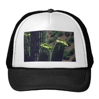 Flowering Saguaro Hat