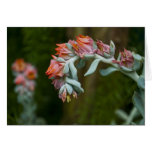 Flowering Succulent Greeting Card