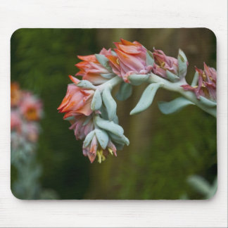 Flowering Succulent Mouse Pad
