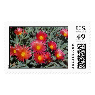 Flowering Succulents Postage