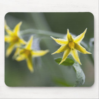 Flowering Tomato Plant Mouse Pad
