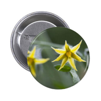 Flowering Tomato Plant Pinback Button