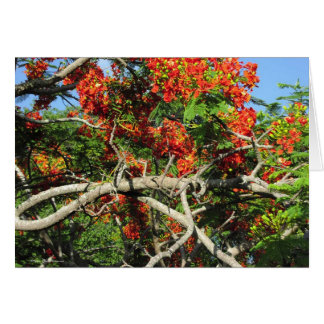 Flowering Tree - Kauai, Hawaii Card