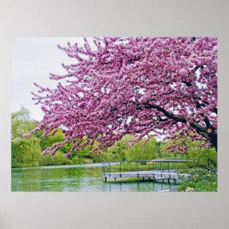 Flowering tree over lagoon poster