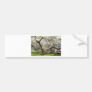 Flowering trees with white blossom in spring bumper sticker