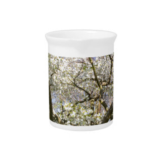 Flowering trees with white blossom in spring pitcher
