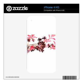Flowering Twig Pink Japanese Cherry Blossom iPhone 4 Skins