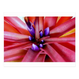 FloweringEpiphyte Postal