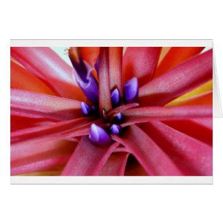 FloweringEpiphyte Tarjeta De Felicitación