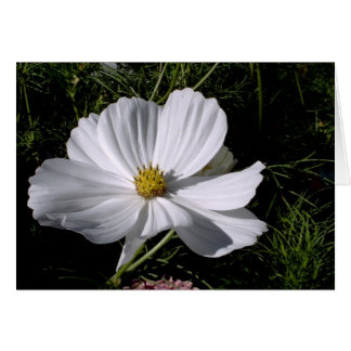 Flower'Ish-09, S.ish Card