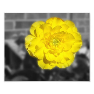 FlowerIV - flor amarilla en fondo gris Cojinete