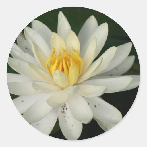 flowerpicture del lilypad del lirio de agua pegatina redonda