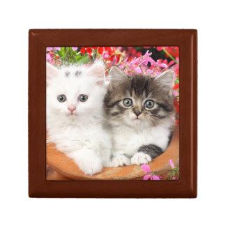 Flowerpot Kittens Gift Box