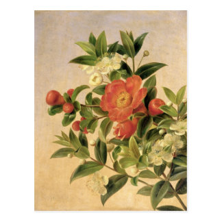Flowers, 1835 postcard