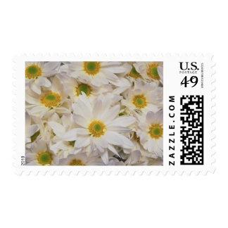 Flowers 202 postage