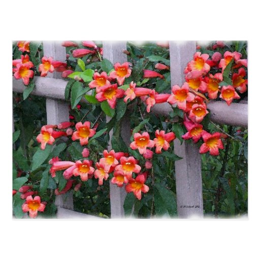 Flowers Along The Fence Postcard