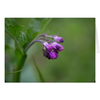 Flowers and blossoms of common comfrey card